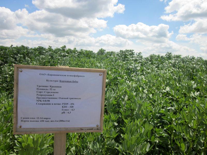 Семинар по выращиванию бобовых в Беларусии Велес-Агро