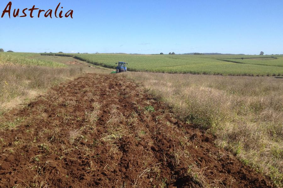 Вспашка сахарного тростника в Австралии дисковой бороной АГМ 4,2
